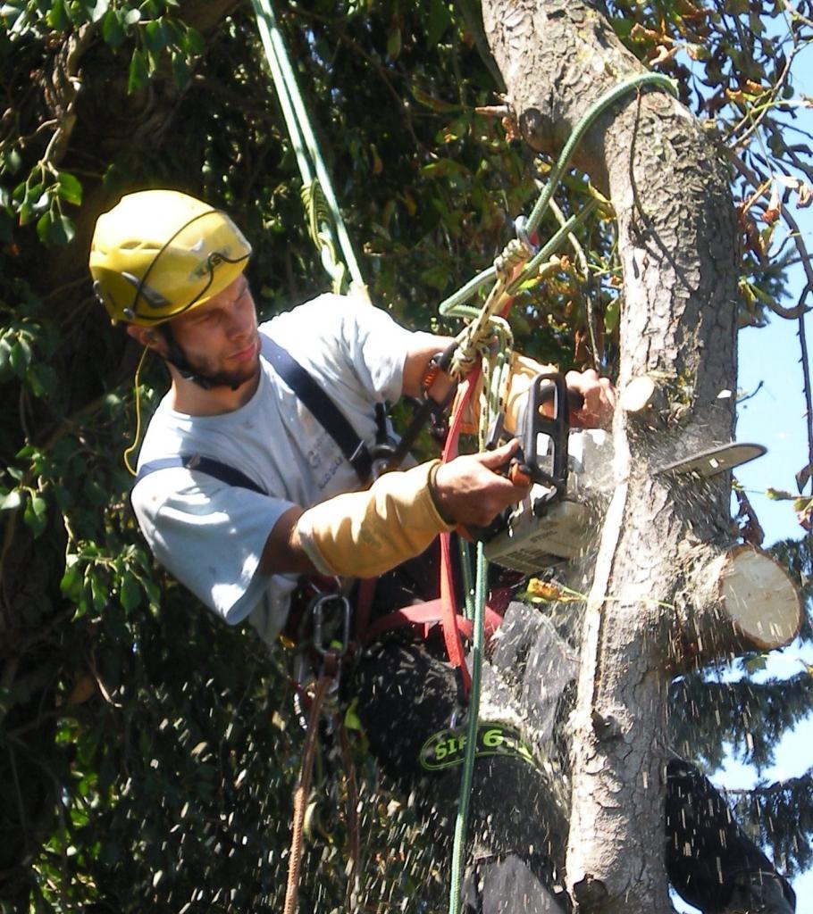C t arbres for Entretien jardin fonsorbes