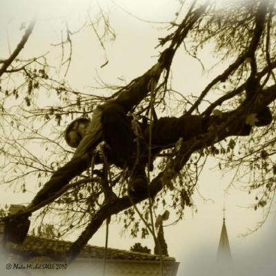 côté arbres