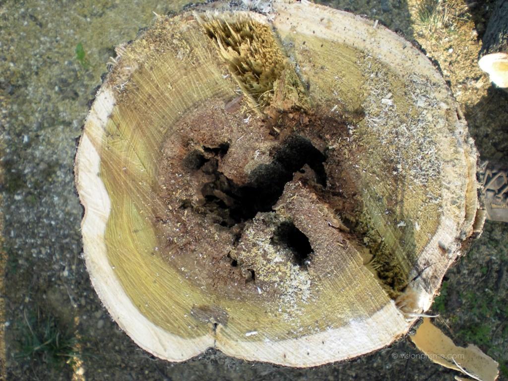 Diagnostic phytosanitaire l 39 isle jourdain gers et haute for Entretien jardin fonsorbes